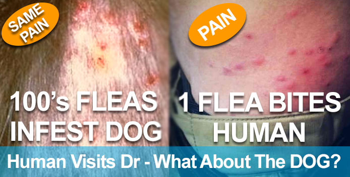 Hanly Vets explain signs and symptoms of fleas.