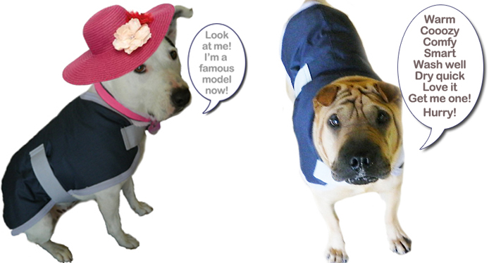 Winter Warmers Dapper Dog coats in the Clinic at Hanly Vets