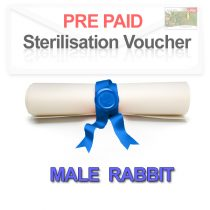 Pre paid Sterilisation for a Male Rabbit