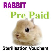 Pre Paid Sterilisation for Rabbits