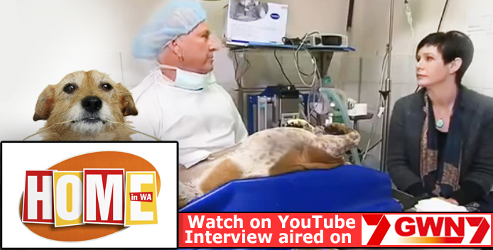 Dr Gary Hanly on why is it important to sterilise pets