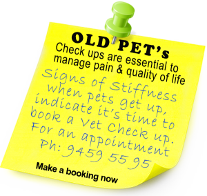 Signs of stiffness means contact Hanly Vets