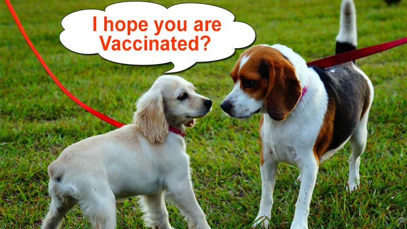 Cheap Vaccination for dogs
