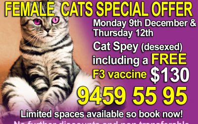 Weekly Christmas Special  Week 2 Offer For Female Cats