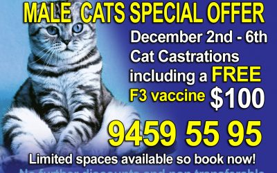 Weekly Christmas Special Week 1 Offer for Male Cats
