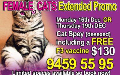 Female Cat Sterilisation Extended Offer $130.00